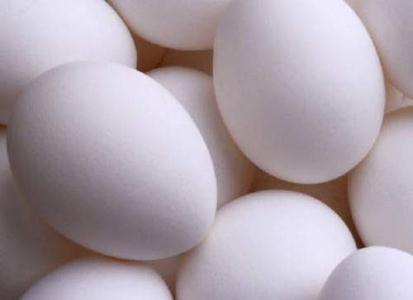 400 کیلوگرم تخم مرغ غیر بهداشتی در کنگان معدوم شد