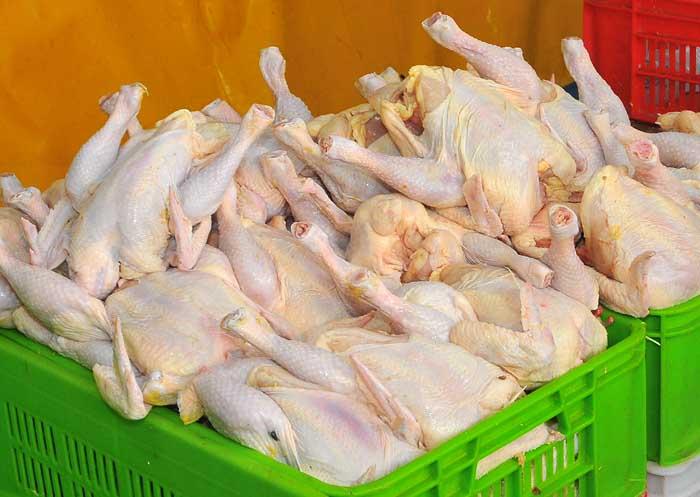 فروش گوشت مرغ - 28